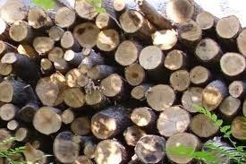 Плевен: Задържаха трима бракониери, спипани със седем кубика дърва