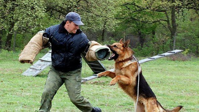 Служебни кучета гониха нарушители пред Детска полицейска академия