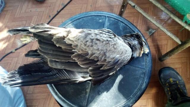 Заловиха браконер, убил десетки застрашени от изчезване птици и бозайници