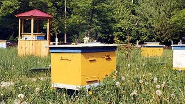 Важно! Пчелари и растениевъди трябва да се регистрират в системата за пръскания