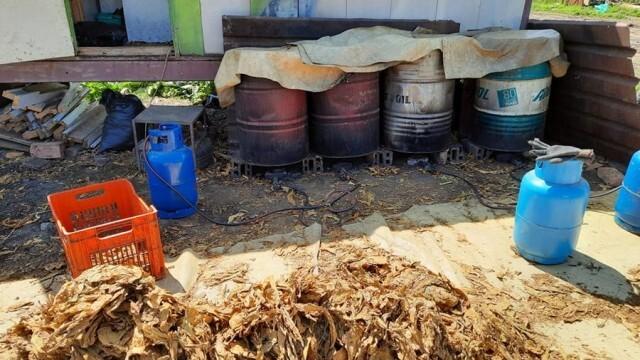 Спипаха двама, докато обработват 300 килограма незаконен тютюн