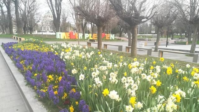 Община Плевен осигури маски и дезинфектанти за кметствата, социалните, детски и учебни заведения