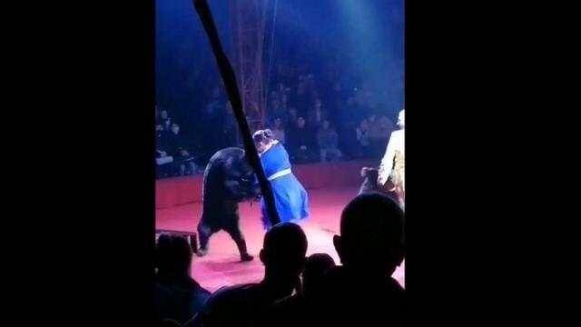 Циркова мечка се нахвърли върху бременна дресьорка