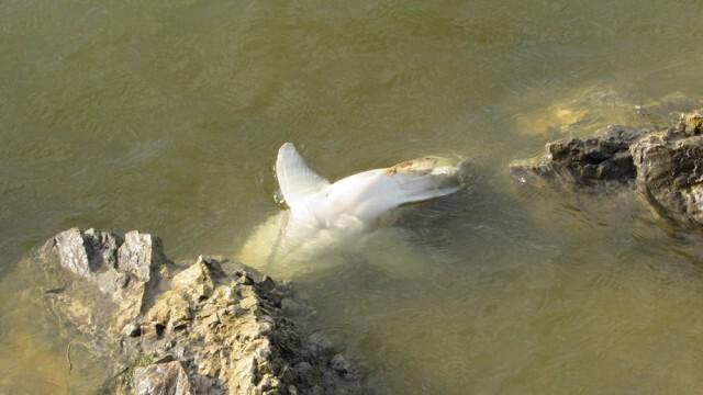 Появи се множество умряла риба в езерото