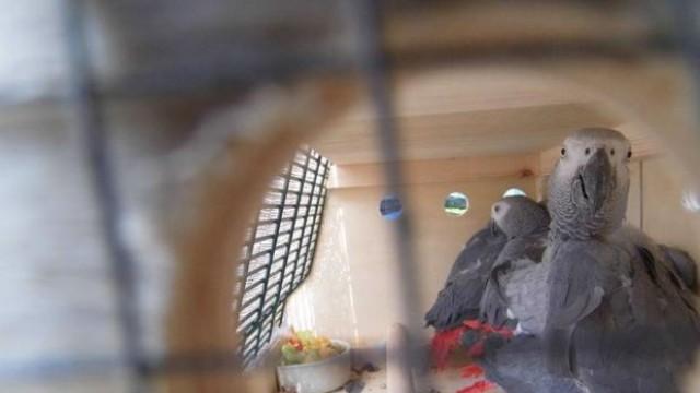 Пратихме за Франция 26 спасени папагала Жако, пускат ги на свобода в Африка /Снимки/