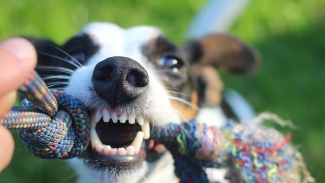 Прокуратурата проверява случай на нахапано от улично куче дете