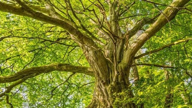 """11-ото издание на конкурс """"Дърво с корен 2020"""" търси историите на впечатляващи дървета"""
