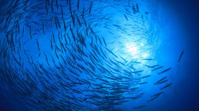 Удължава се забраната за стопански риболов в Дунав