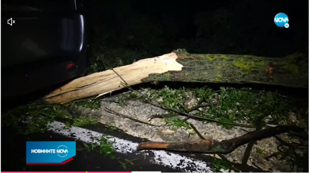Паднали дървета и почупени клони предизвикаха катастрофи в Русе