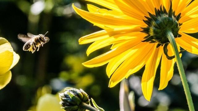 Започват проверки на здравословното състояние на пчелните семейства в цялата страна