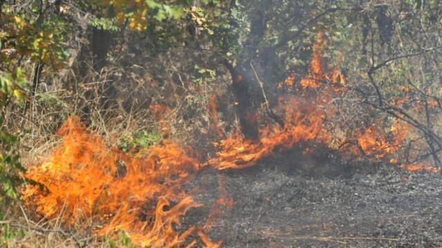 От пожар през уикенда са спасени 500 дка гора в Главинишко
