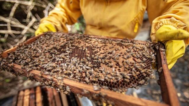 Евродепутати се съгласиха да пазят пчелите и български породи животни
