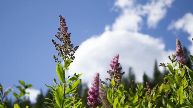Температурите леко се понижават, облаци и дъжд на места в Южна България