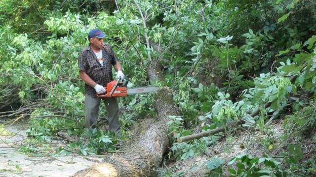 Доброволци чистиха сухи и опасни клони от дърветата около Бригадирската поляна в Кайлъка