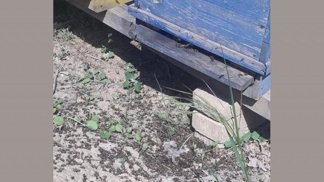 Сигнали за масово отравяне на пчели в Плевенска област