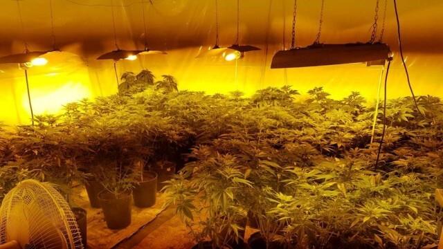 Разкриха наркооранжерия със 116 растения