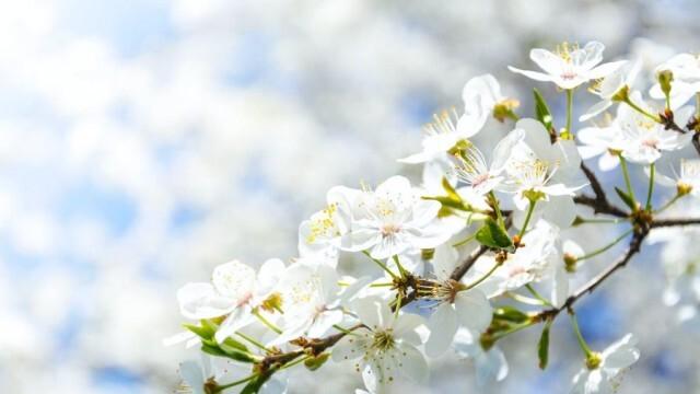 Честита пролет, ето какво се прави в деня на пролетното равноденствие