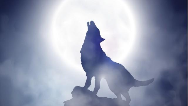 * Ще навлязат между вас свирепи вълци, които няма да жалят стадото…