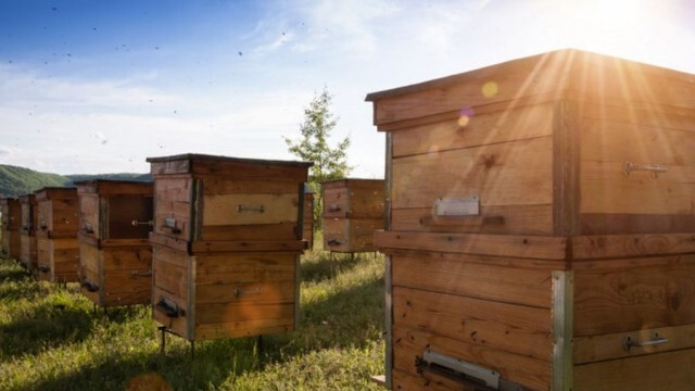 Внимание, пчелари! Ще третират срещу плевели по железопътни линии