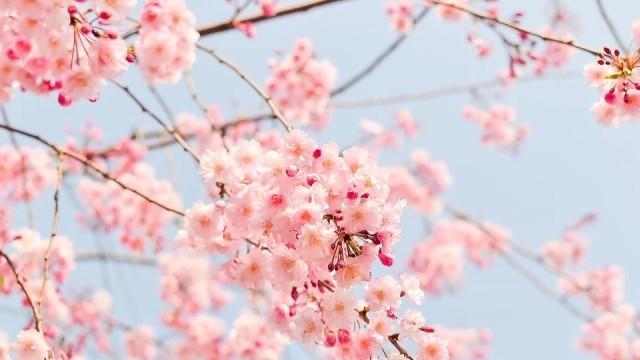 Започва пролетното затопляне, в събота и неделя валежите ще са предимно от дъжд