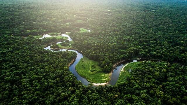 За по-малко от година: В Амазония са били изгубени над 10 000 квадратни километра гора