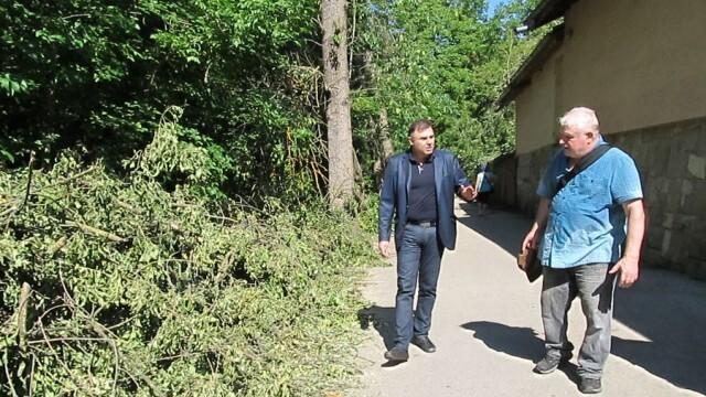 Областният управител на Плевен не установи нарушения при санитарната сеч в