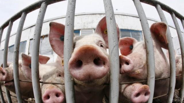 Контрол: Евродепутати ще ни проверяват хуманни ли сме към животните