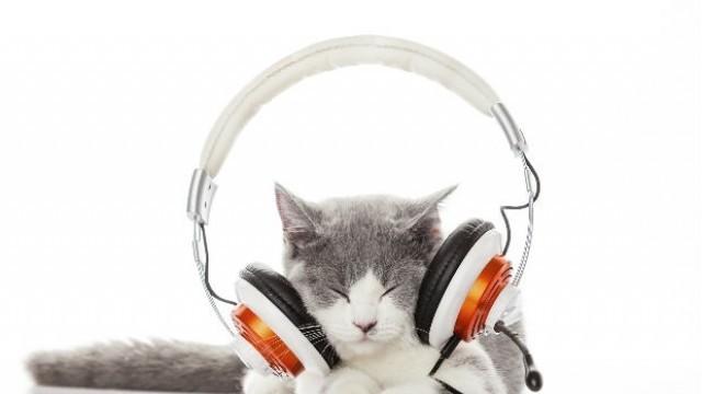 Котка на продуцент надушвала кое ще стане хит