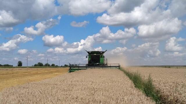 Въпреки по-ниските с 30 % добиви на пшеница не се очаква поскъпване на хляба и брашното