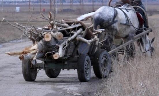 Бракониери пребиха двама горски, хванали детето им с каруца