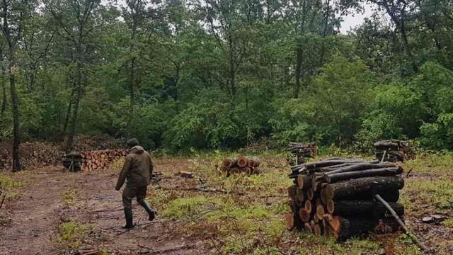 """142 кубика незаконна дървесина заловиха в """"Каракуз"""""""