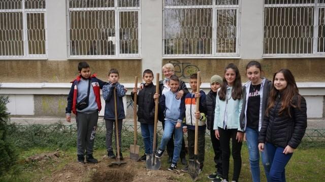 Още 48 дръвчета намериха своя дом днес в русенските училища