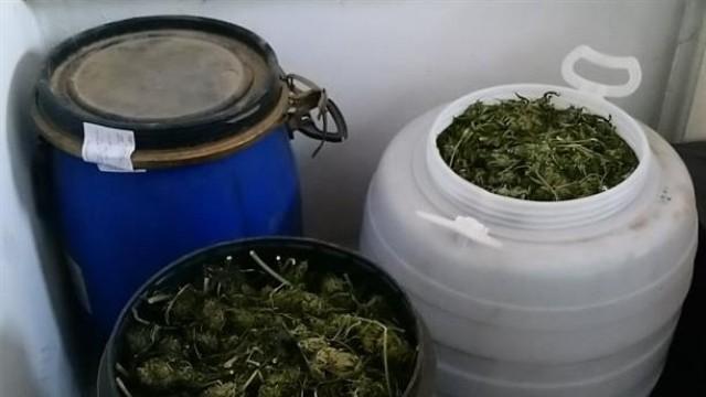 Закопчаха свищовлия, сушил 18 кг марихуана в нива край Бяла
