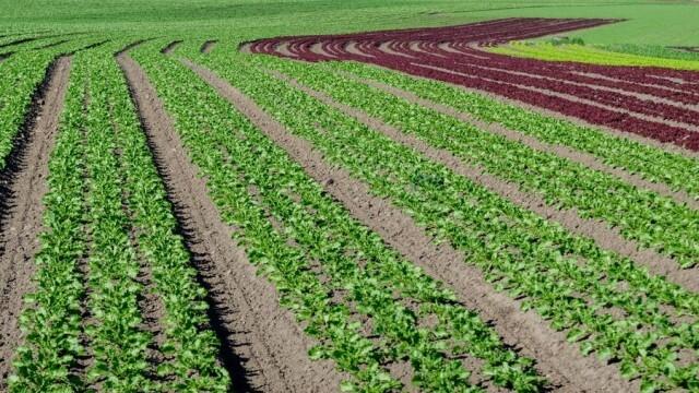 Предлагат: Да се следи по електронен път движението на продуктите за растителна защита