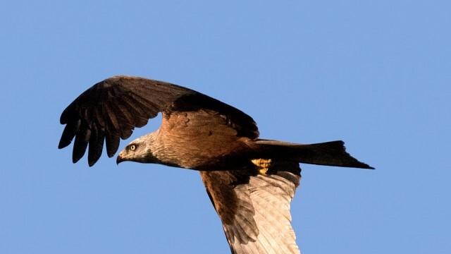 Простреляха тежко царски орел