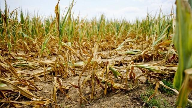 Ще компенсират стопаните с пропаднали земеделски площи заради сушата