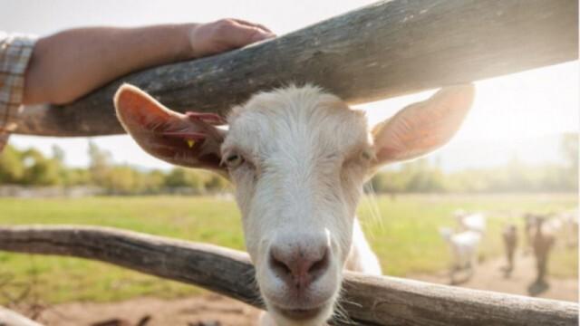 Харчат 9 млн. лв. за преброяване на земеделските стопанства