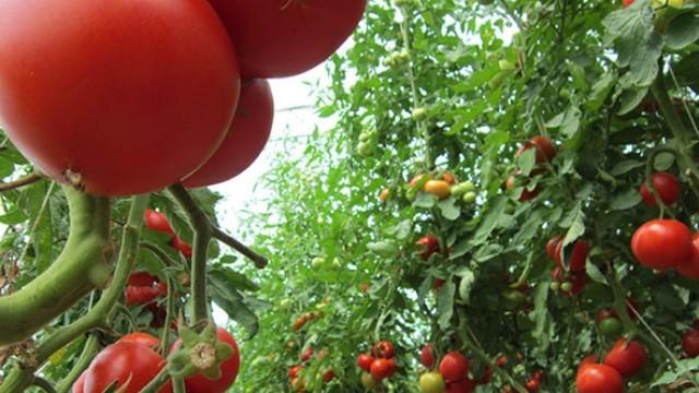 Тръгва приемът на заявления по схема de minimis за зеленчуците