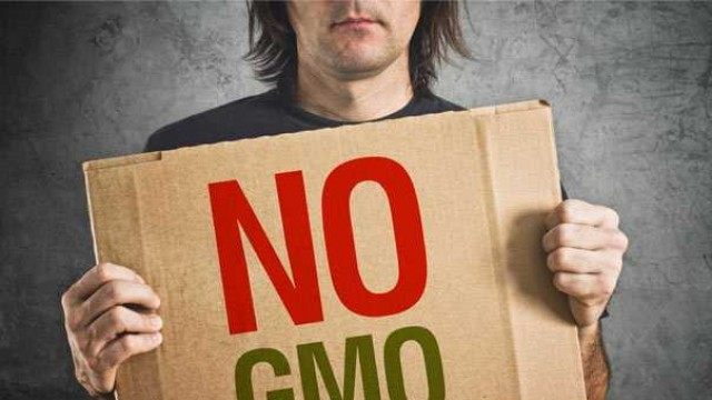 Шотландия забранява ГМО-културите