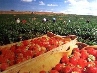 Набират 400 берачки на ягоди в Испания, вижте условията