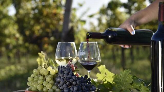 Нова мярка в лозаро-винарския сектор подпомага информирането на потребителите