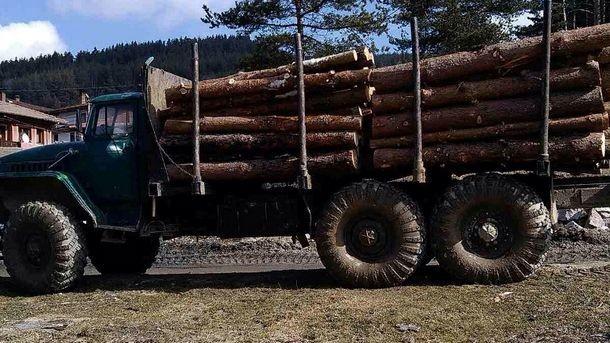 Бойкот провали първия електронен търг за дървесина