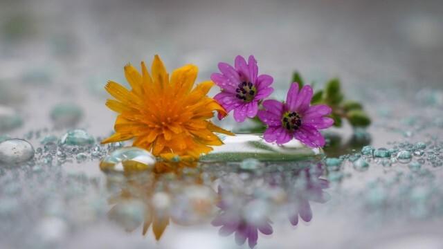 Днешният ден се чества като празник на живота и избавлението