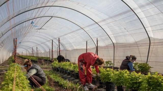 Германия отваря границата за сезонните работници от ЕС от 16 юни
