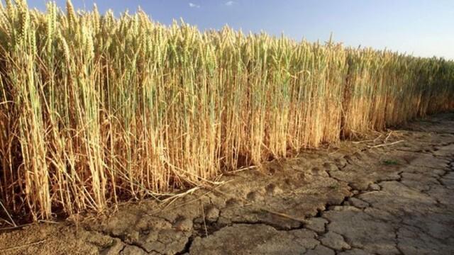 Одобриха още 5 млн. лева за компенсиране на земеделските стопани заради сушата