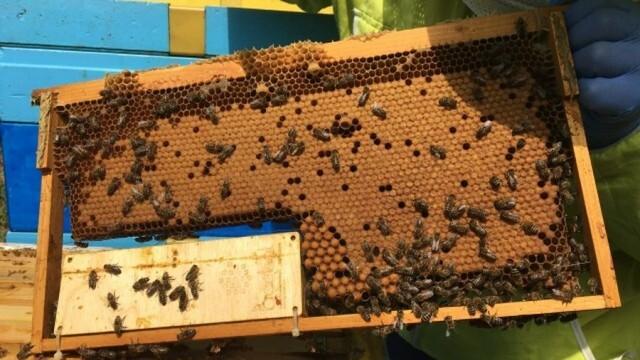 До 16 август пчеларите могат да подават заявление за плащане