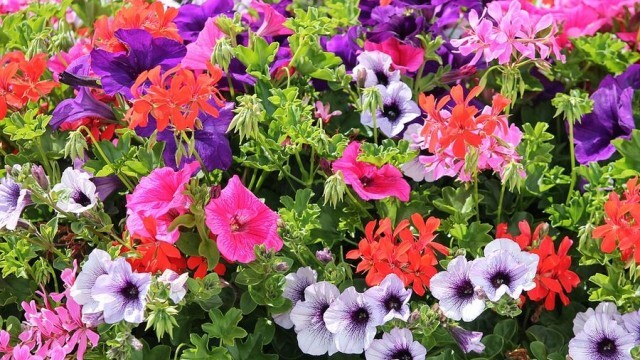 """Летни цветя и подправки на атрактивни цени предлага """"Паркстрой"""" ЕООД"""