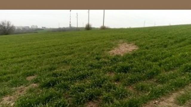 Наземно третиране на пшеница ще се извърши в землището на Плевен