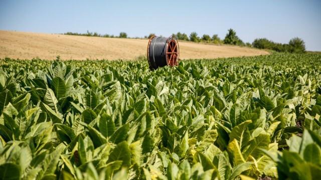 Промени в еднодневните трудови договори, заради тютюнопроизводителите предлагат от МТСП