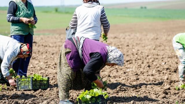Земеделци недоволни, че ги няма в програмите за подпомагане заради  COVID-кризата